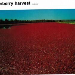 Cranberry+Bog1