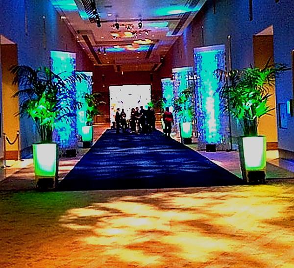PBO 46 blue carpet long view 1