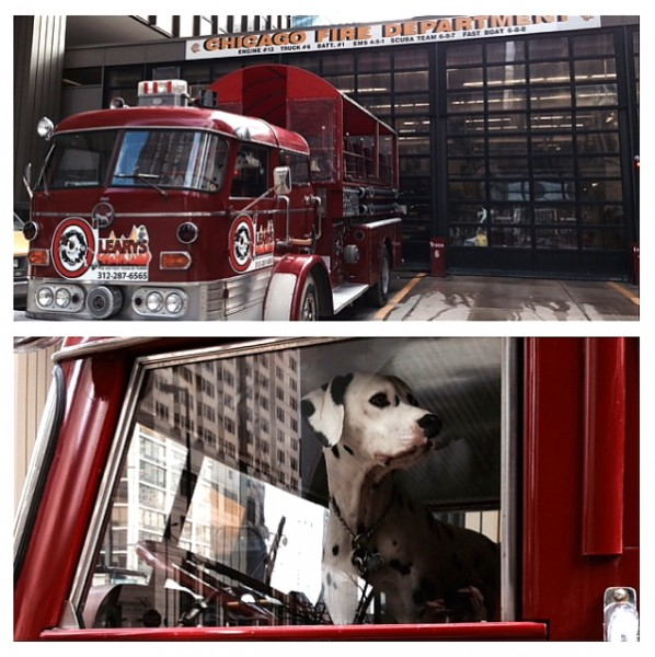 Home Show 2014  firetruck and dalmation duo photo