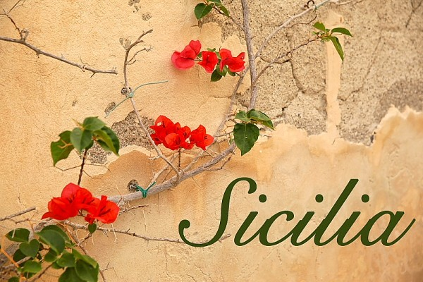 Butera flowers on wall with Sicily