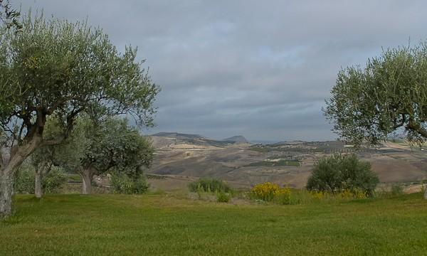 Butera olive grove