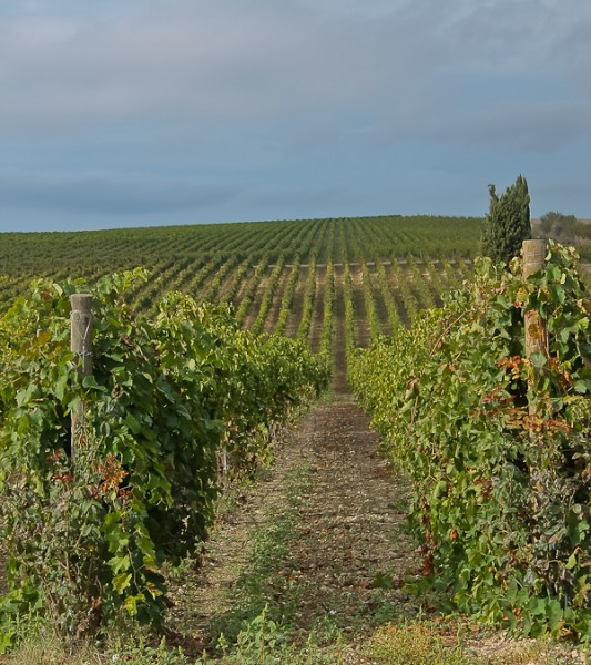 Butera vineyard