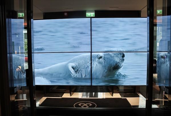 Arctic Lights polar bear screen