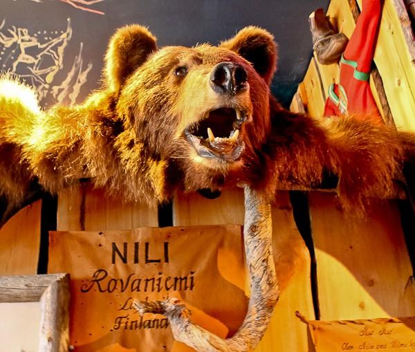 Nili bear