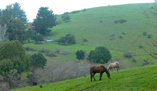 Point Reyes horses
