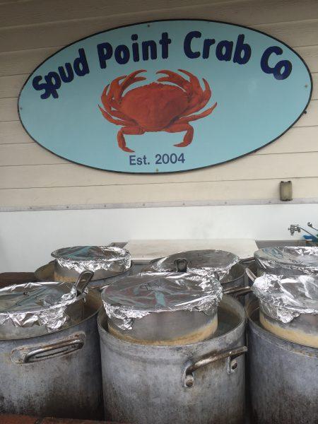 Bodega crab 10