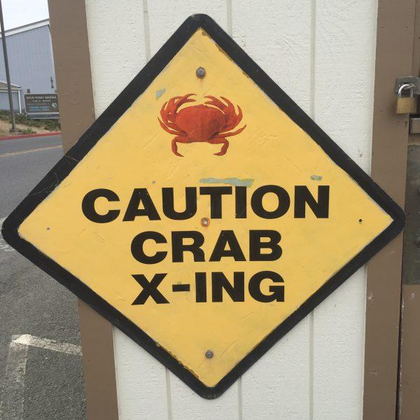 Bodega crab 9