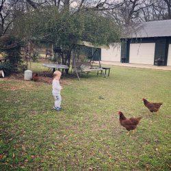 VR & chickens 5